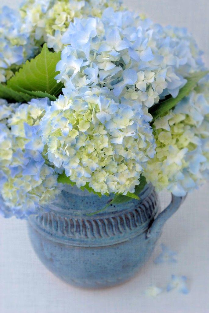 blues... for Hydrangeas...