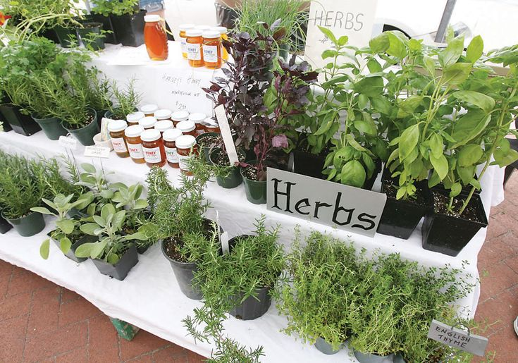 two tiered herb display. small bench in front of table covered with tablecloth