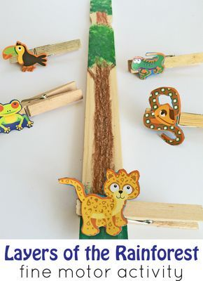 Layers of the rainforest preschool fine motor activity. Perfect to go along with the book The Greak Kapok Tree!