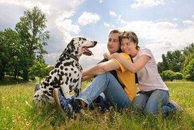 die besten 17 ideen zu tick treatment for dogs auf pinterest mittel gegen hundefl he und. Black Bedroom Furniture Sets. Home Design Ideas