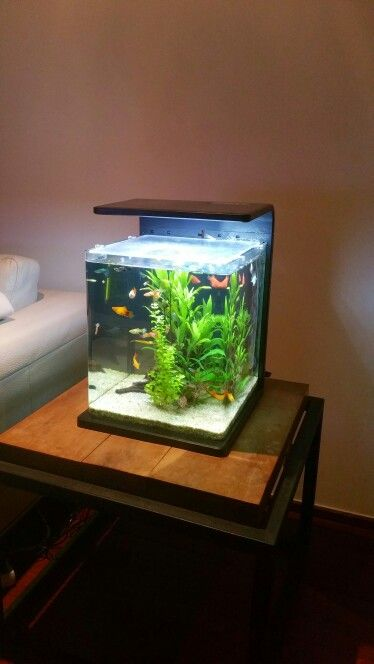 Small aquarium 60l