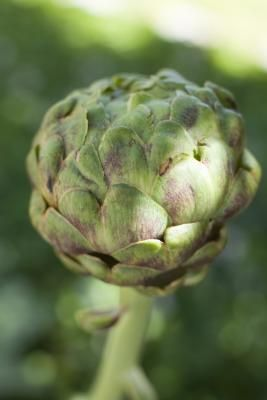 What Are the Health Benefits of Artichoke Tea?  [Article]