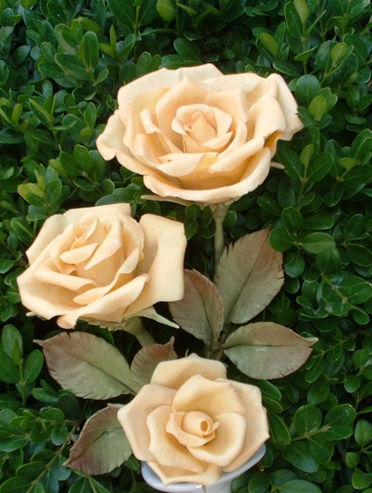 Rose con gambo