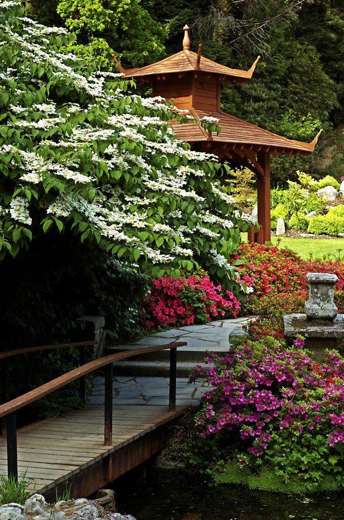Japanese Gardens, Powerscourt, Enniskerry, Wicklow, Ireland. (White flowering tree)