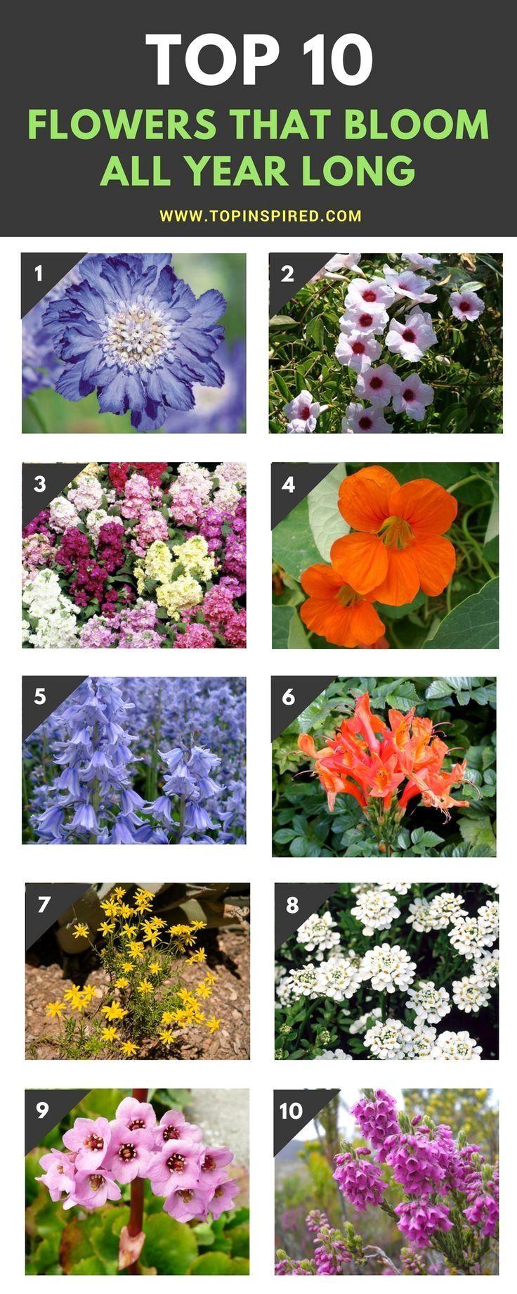 Top 10 Wonderful Flowers That Bloom All Year Long Plants