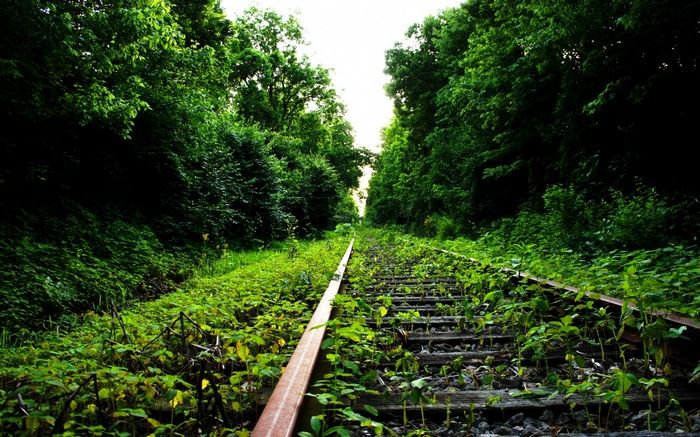 Nature Abandoned Railway Wallpaper Forest Wallpaper Forest Background Wallpaper