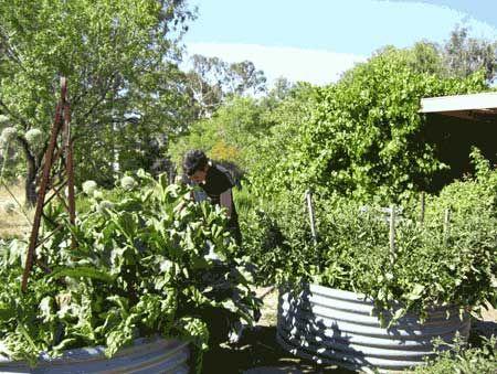 28 best Richmond Street - Front images on Pinterest | Front gardens ...