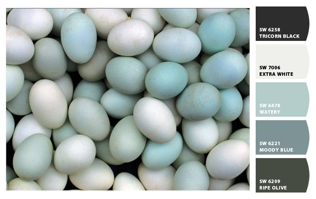 Robin 39 s egg blue inspired color paint colors from for Watery paint color