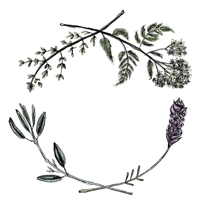 Healing herbs wreath by Sarah Mould...  Maybe switch out the sage for catnip and add a bee in the middle.  would make an awesome tattoo