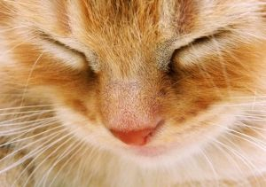 Gatito soñoliento