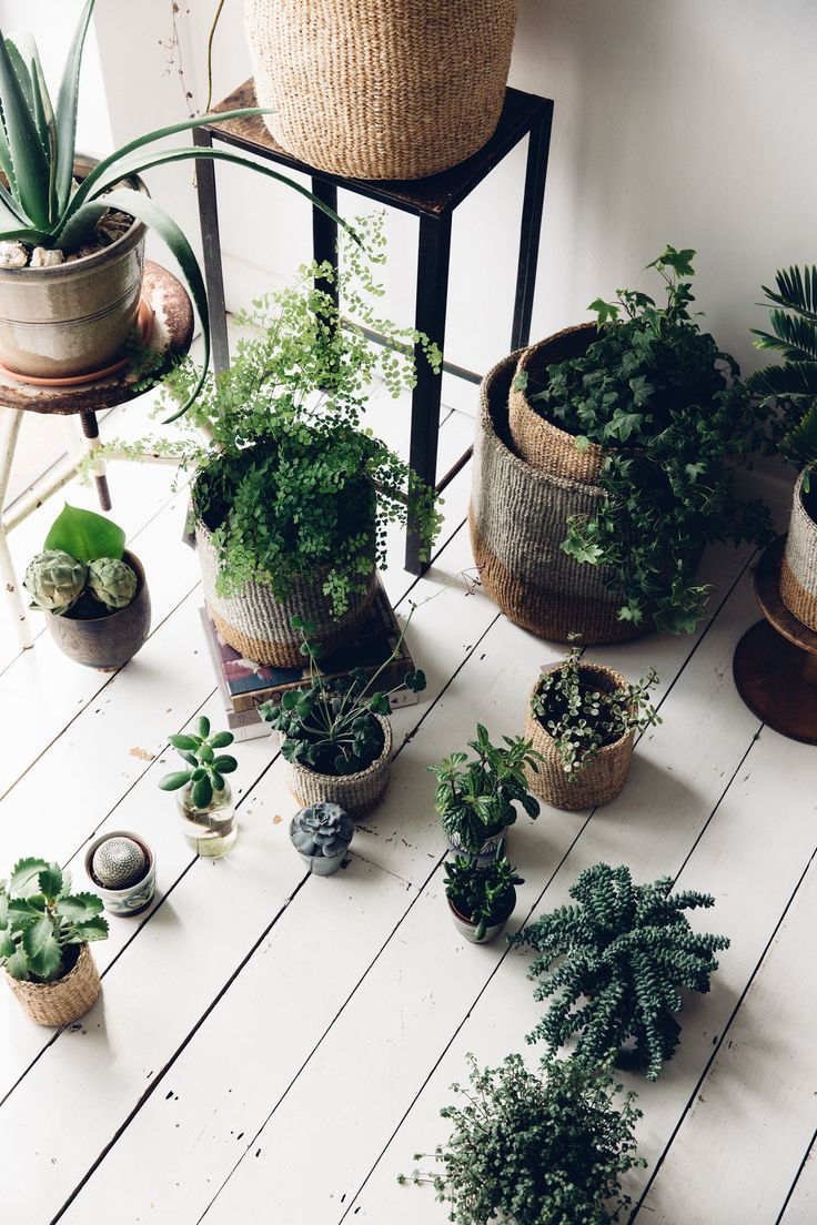 Serious plant envy.