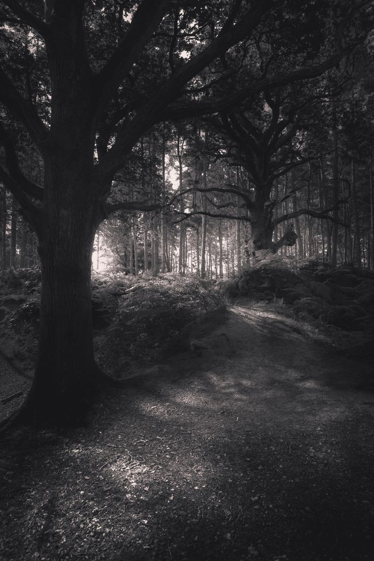 "freddie-photography: ""pintora-art: ""Freddie Ardley ""Path Through Ominous…"
