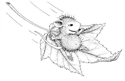 house mouse designs coloring pages - photo#8