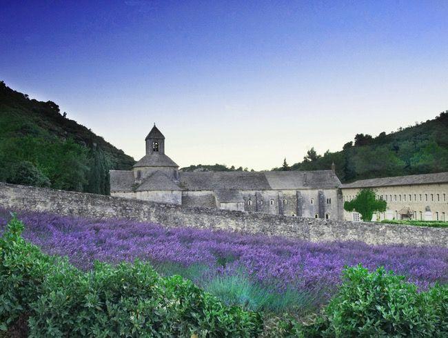 Abadia de Sénanque rodeada de campos de lavanda, é uma abadia cisterciense localizada perto da vila de Gordes, no departamento de Vaucluse, região da Provença, França. Nascida como uma comunidade de monges cistercienses, em 1148, foi consagrada em 1178, conhecendo  o seu pico do século VIII até o século XIV, chegando a possuir 4 usinas, 7 fazendas e numerosas terras na Provença. Em 1544, com as guerras de religião, o mosteiro foi destruído.  Fotografia: Anne McGlynn.