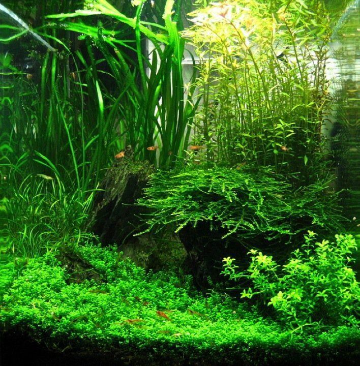 Nano Aquascapes - Aquascaping Aquarium