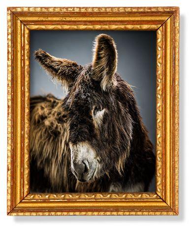 Aramis | The Donkey Sanctuary