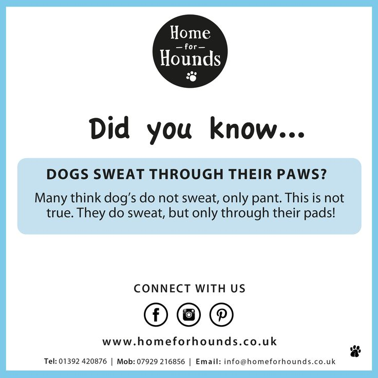 Did you know, dogs sweat through their paws? #factoftheday #knowyourdog #trainyourbrain #doglove #dogdaycare #homeforhounds