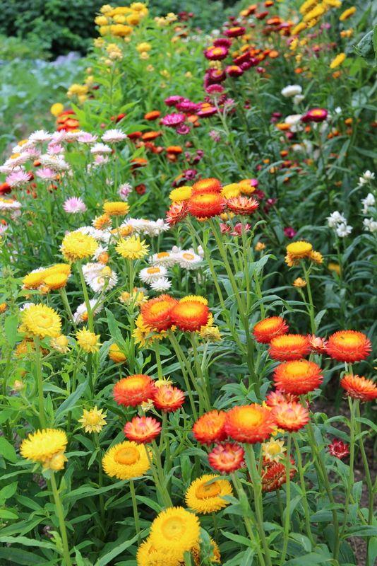 SOM SKABT TIL BØRNENES HAVE - Plants for the children's garden