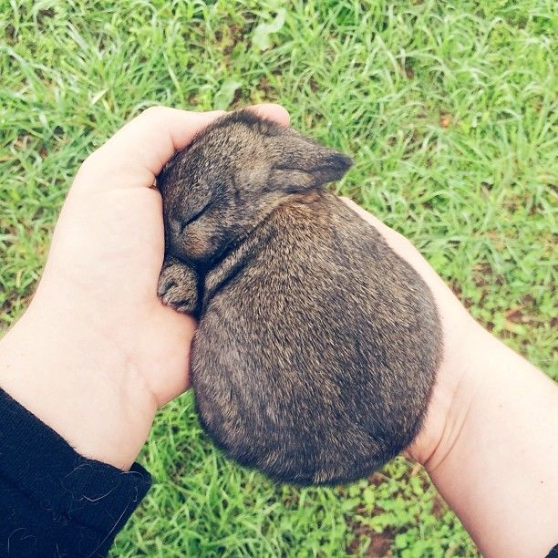 baby bunny sleeping in her hands
