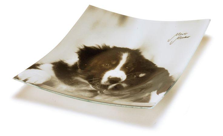 Piattino con cane. http://www.recordit.com/