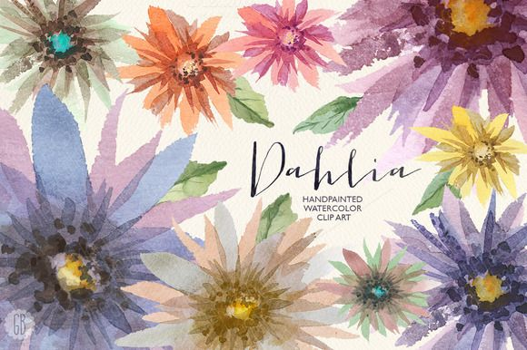 Aquarelle dahlia flowers by GrafikBoutique on Creative Market