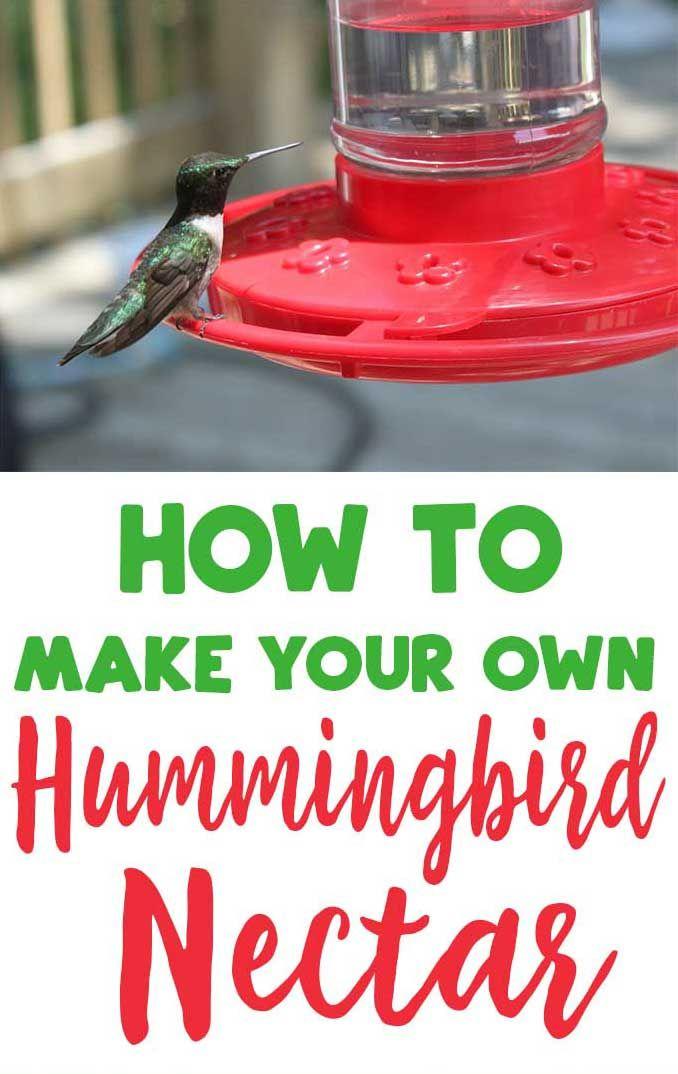 Homemade Hummingbird Nectar Recipe Garden Ideas Homemade