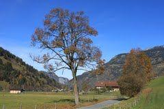 Gasteinertal-Radweg zwischen Bad Hofgastein und Dorfgastein - Google Maps