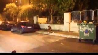 leo cane morto a san basilio roma - YouTube