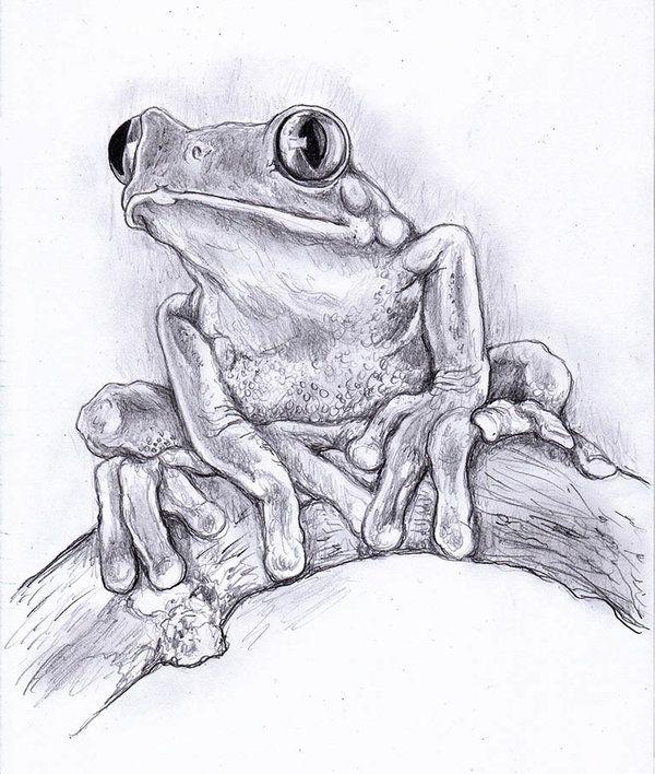 очень важно лягушка рисунки карандашом все дело вариаторе