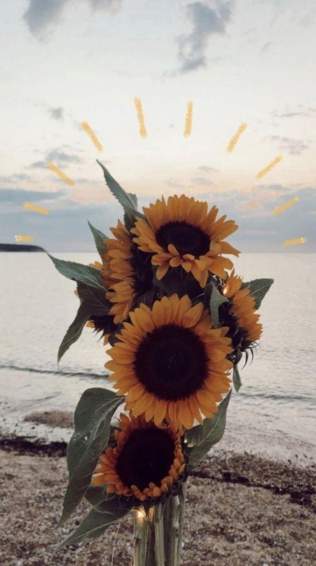 Carta Da Parati Flores Tumblr Sunflower Wallpaper Nature Photography Flower Wallpaper