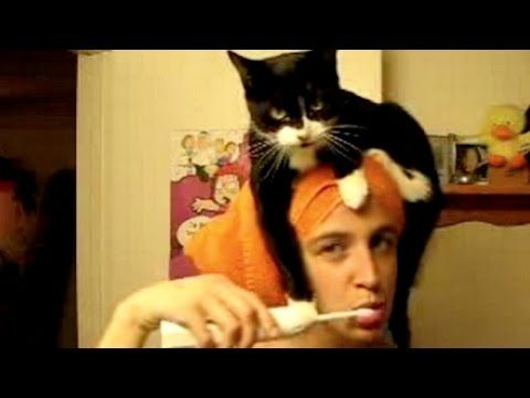 Funny cats annoying owners - Cute cat compilation - YouTube
