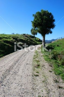 Road to Nowhere, New Zealand Royalty Free Stock Photo