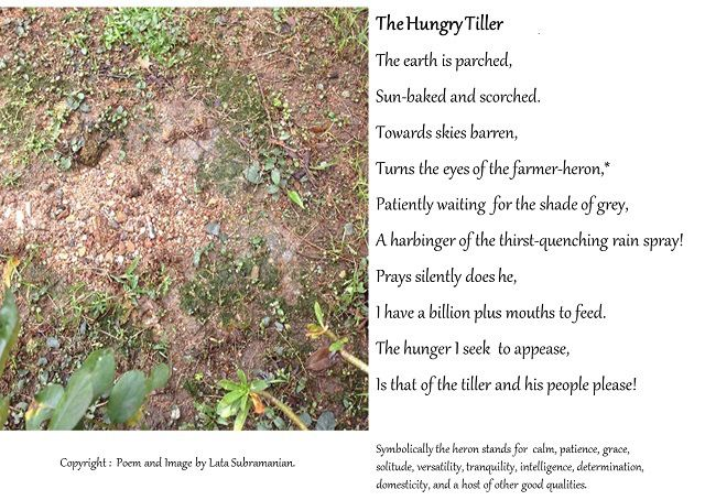 The Hungry Tiller