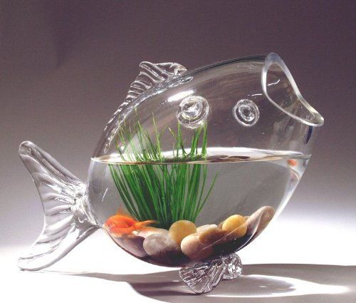 Id put a tiny colorful tetra, but not a beta. Fish Shaped Glass Fish Bowl Aquarium Air plant by PartySpin