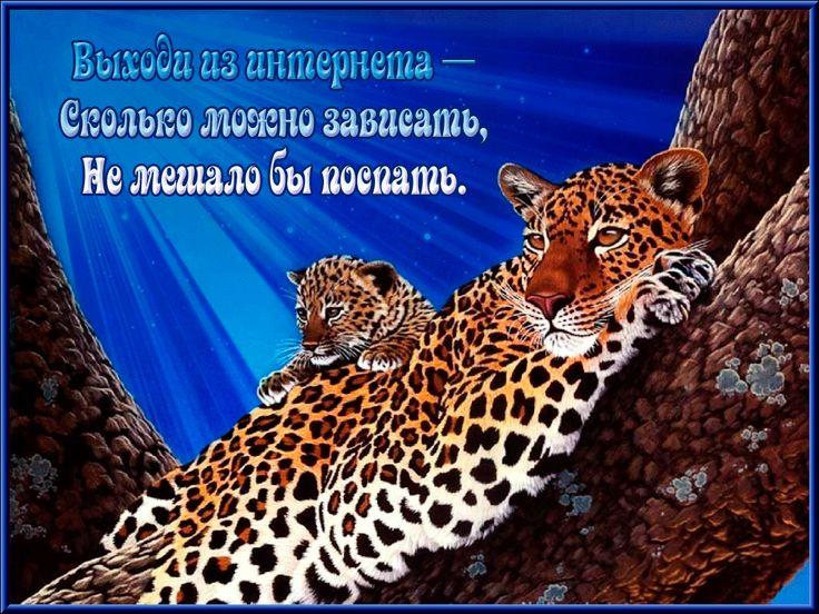 Éjszakai leopárdok