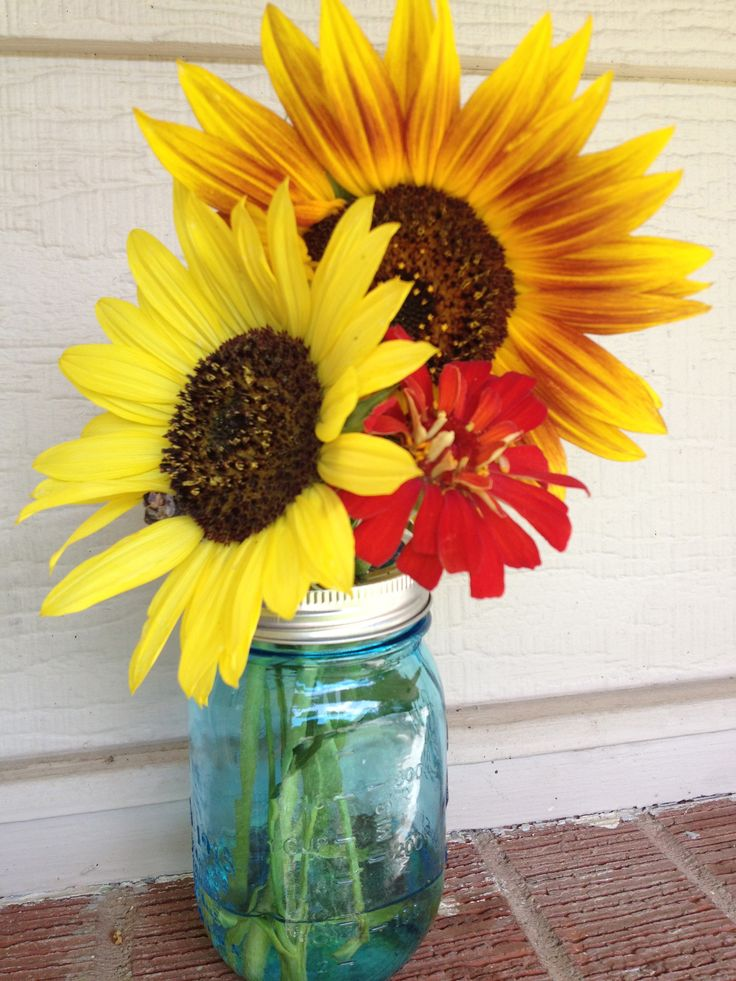 how to cut sunflowers for a vase