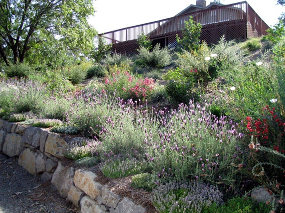 76 best images about hillside plants on pinterest for Hillside landscaping plants