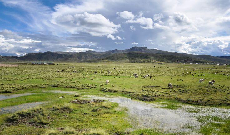 Paysages de Bolivie, entre Puno et Copacabana