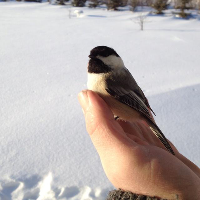 Found a little bird.