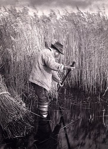 A Reed Cutter at Work - Peter Henry Emerson
