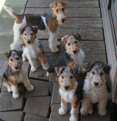 Thought to terrier seminars - Crystallize Kennel