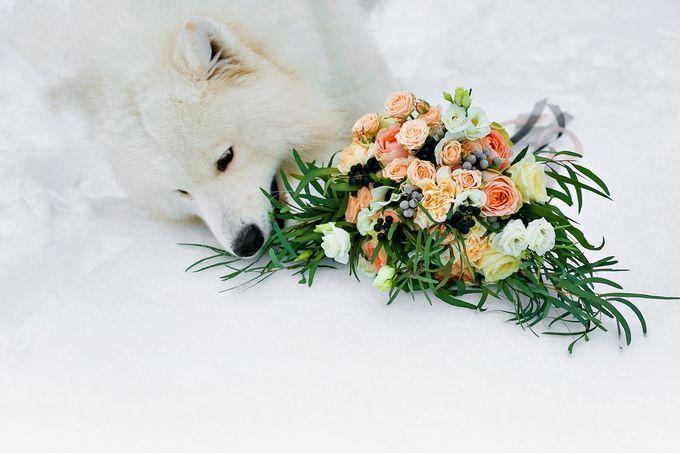 Отчет о нашей Волчьей зимней свадьбе. Выпьем за любовь! : 165 сообщений : Отчёты о свадьбах на Невеста.info