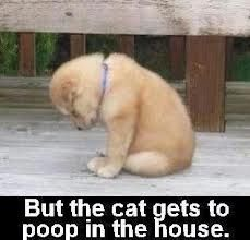 What a cute puppy! | Quotes at Repinned.net
