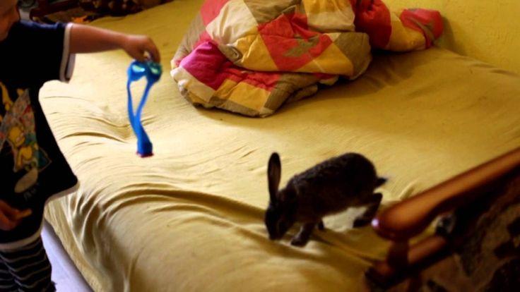 Любимый заяц русак