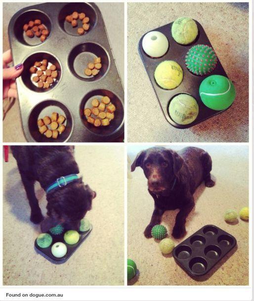 las maneras mas creativas de entretener a tu perro https://colasfelices.wordpress.com/category/hora-de-jugar/