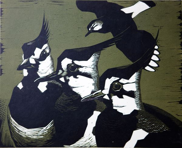 'Lapwings' linocut by Robert Gilmor.