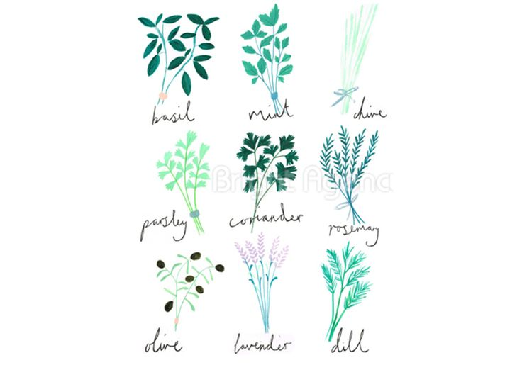 #herbs #art by Olivia Holden and is part of our new #exhibition #love #nature buy the #print For more info, have a look at out what's on page http://www.thebrightemporium.com/printsandproducts/print-on-demand/