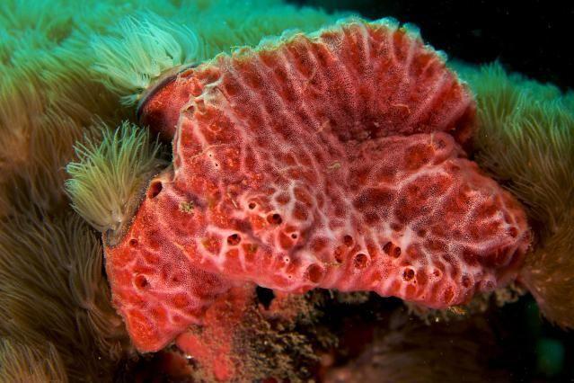 The 6 Basic Invertebrate Groups: Sponges