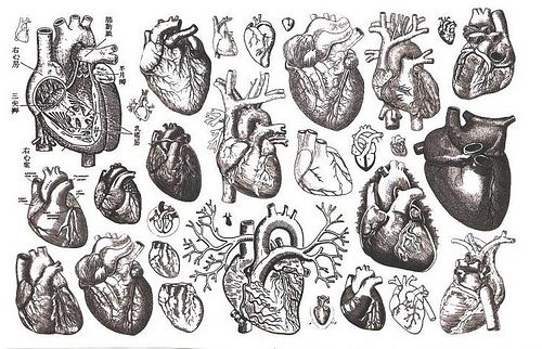 drawing Black and White heart Anatomy human heart anatomically correct heart