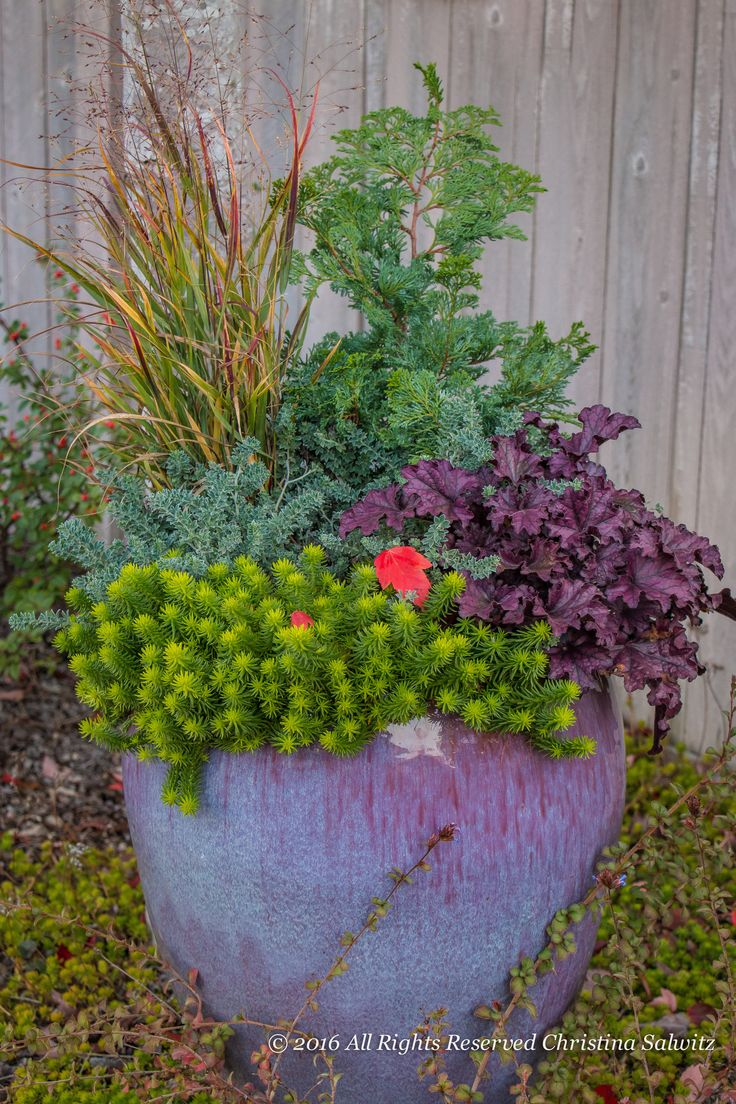 Ideas For Planting Succulents: 700 Best Images About #Container #Gardening Ideas On